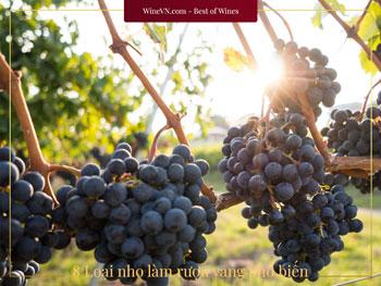 loại nho làm rượu vang phổ biến nhất Thumbnail