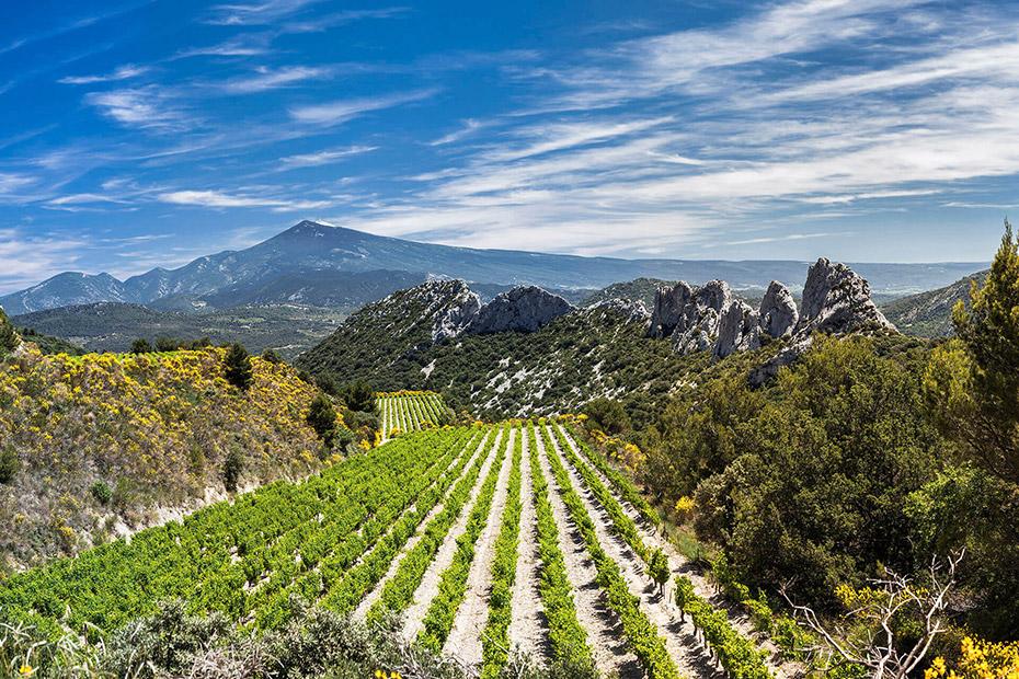 Tìm Hiểu Về Rượu Vang Cotes Du Rhone