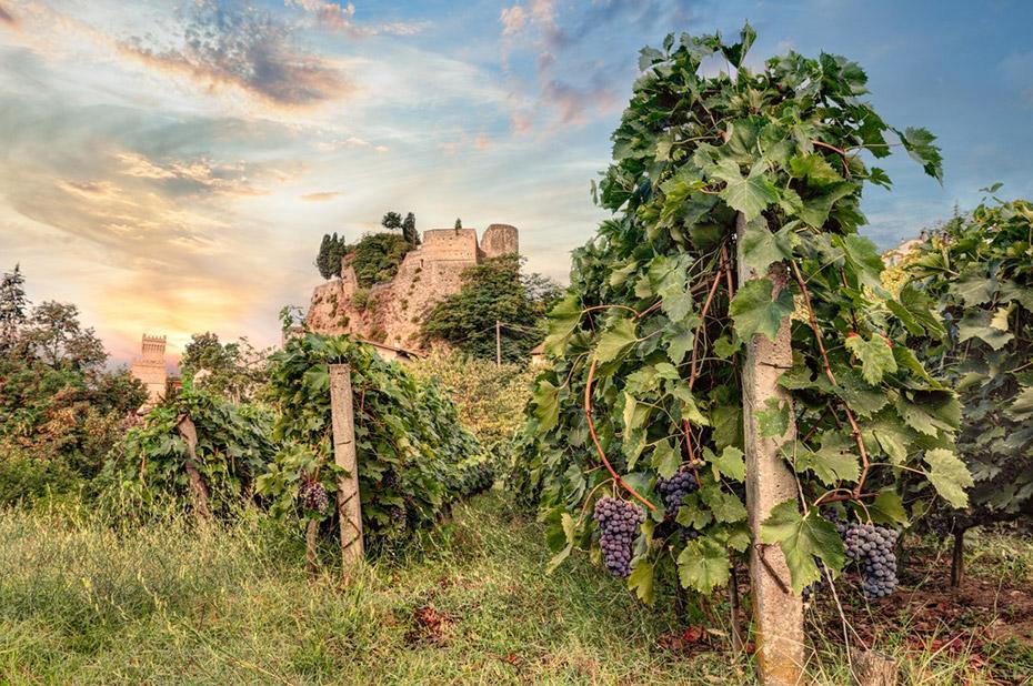 Lịch Sử Rượu Vang Của Vùng Emilia – Romagna