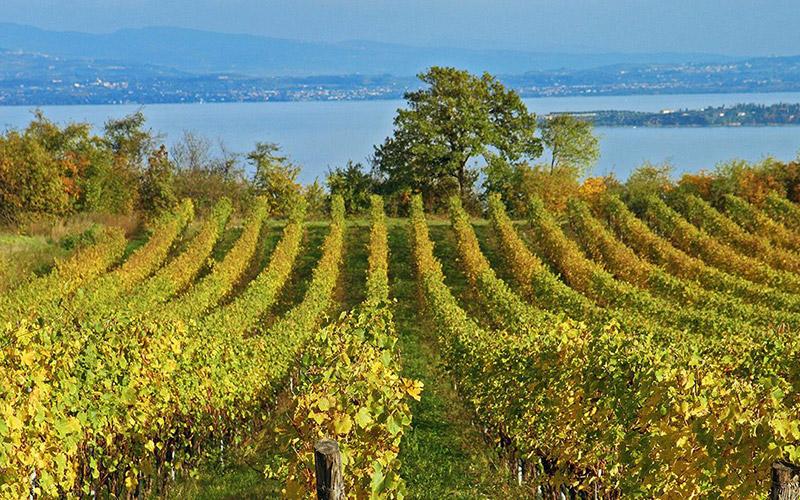 Lịch sử rượu vang của vùng Lombardy